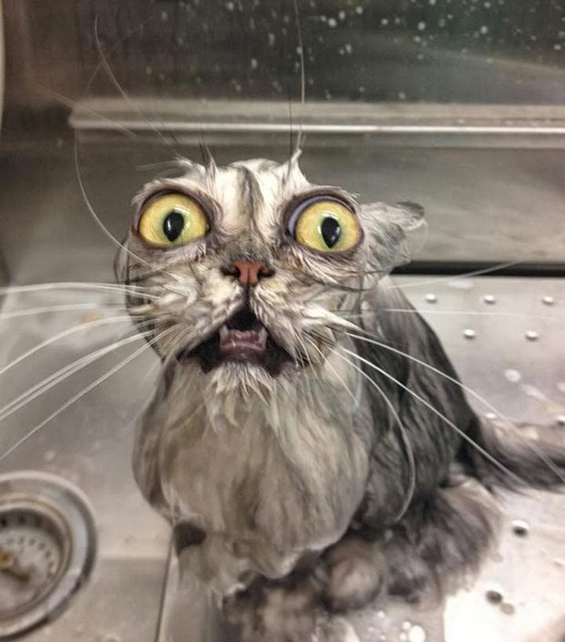 Depois do banho