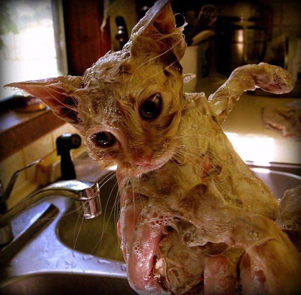 Depois do banho (20)