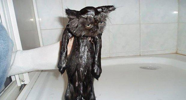 Depois do banho (23)