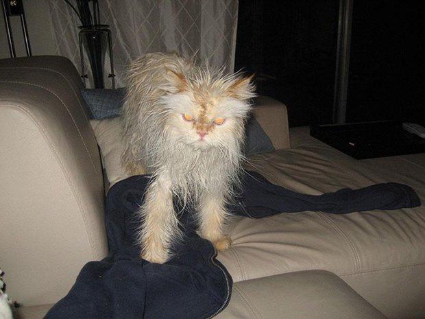 Depois do banho (24)