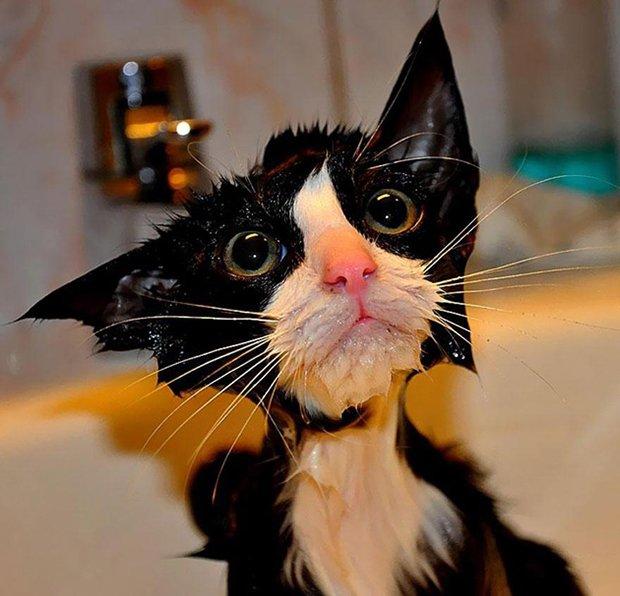 Depois do banho (3)