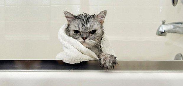 Depois do banho (7)