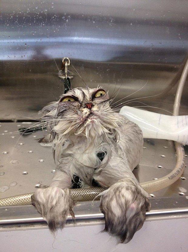 Depois do banho (8)