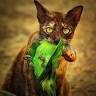 Fotos incríveis da vida selvagem na Tailândia