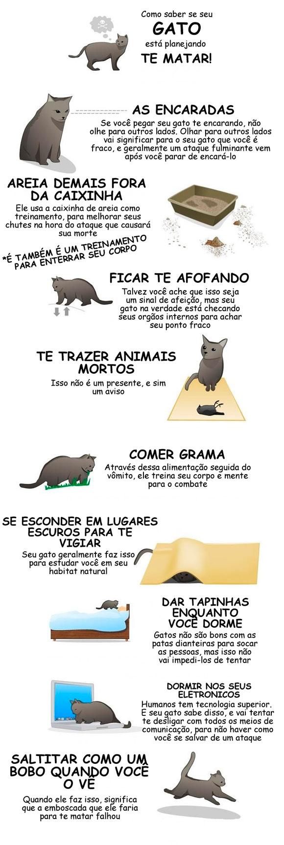 Como-saber-se-o-seu-gato-está-planejando-a-sua-morte