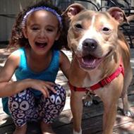 Cães resgatados, antes e depois da adoção