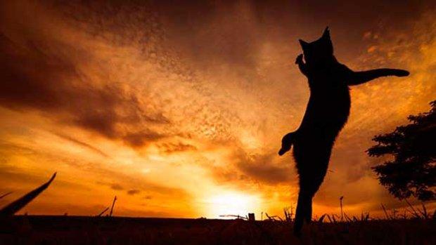 Gatos são fotogênicos (1)