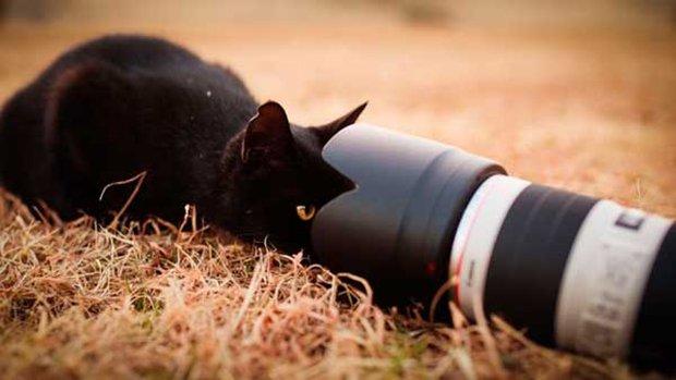 Gatos são fotogênicos (11)
