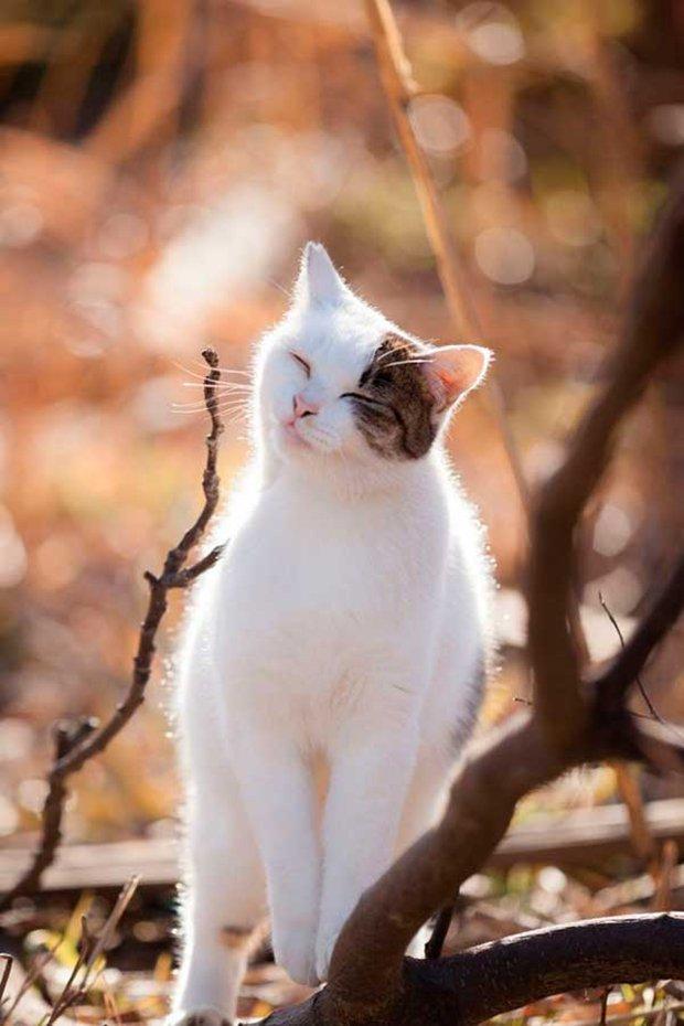 Gatos são fotogênicos (13)