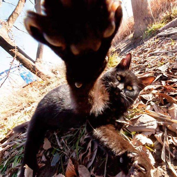 Gatos são fotogênicos (15)