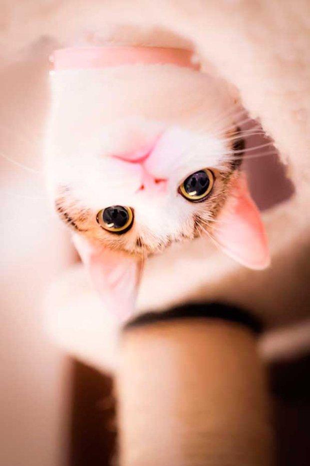 Gatos são fotogênicos (16)