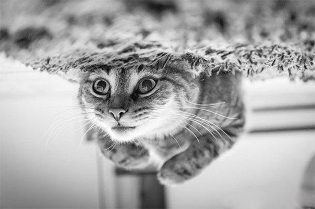 Gatos são fotogênicos (21)