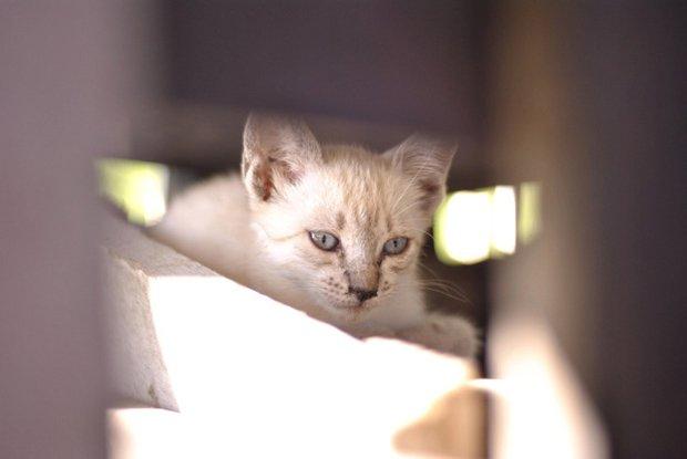 Gatos são fotogênicos (23)