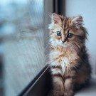 Gatos são fotogênicos (24)