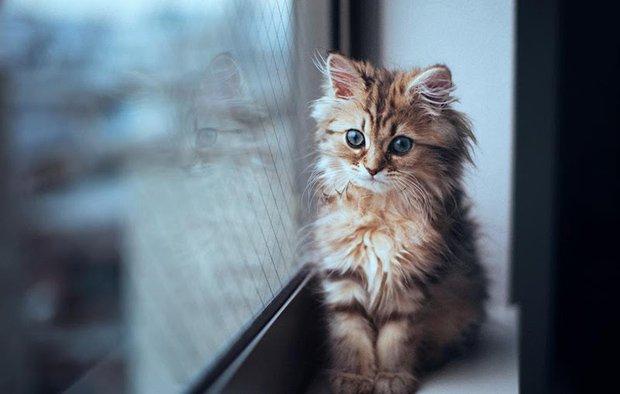 Gatos são fotogênicos