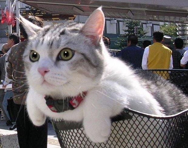 Gatos são fotogênicos (26)