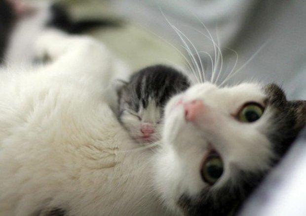Gatos são fotogênicos (27)