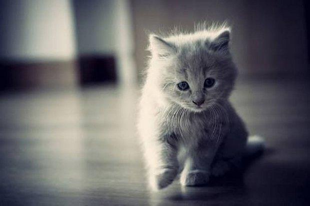Gatos são fotogênicos (28)