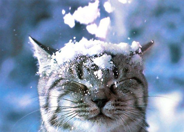 Gatos são fotogênicos (29)