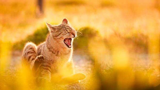 Gatos são fotogênicos (3)