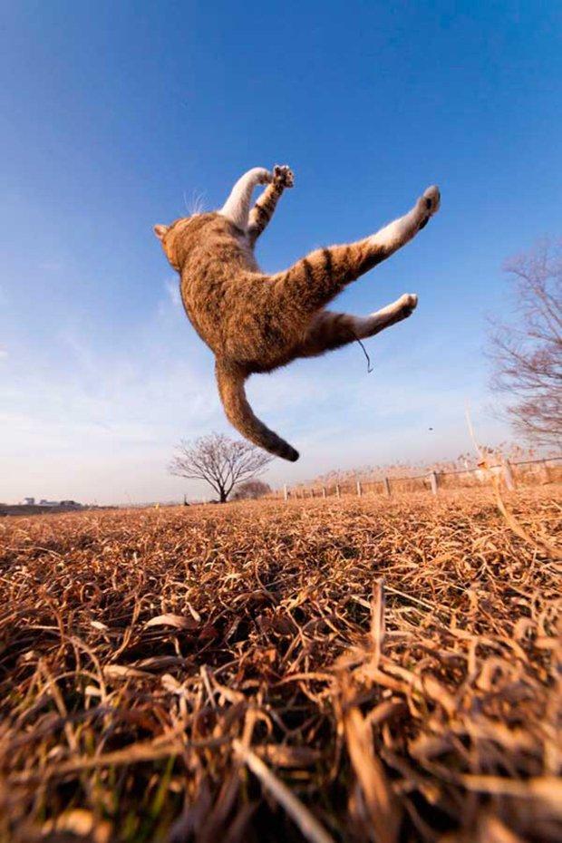 Gatos são fotogênicos (4)