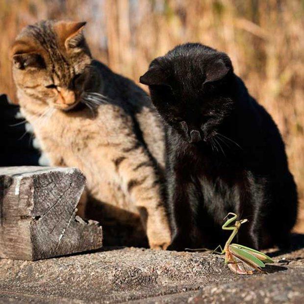 Gatos são fotogênicos (6)