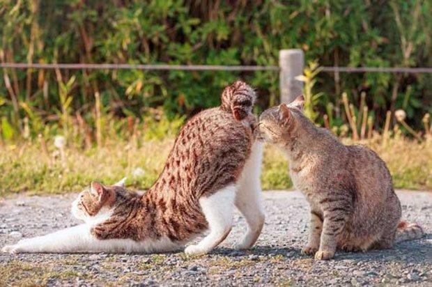 Gatos são fotogênicos (7)