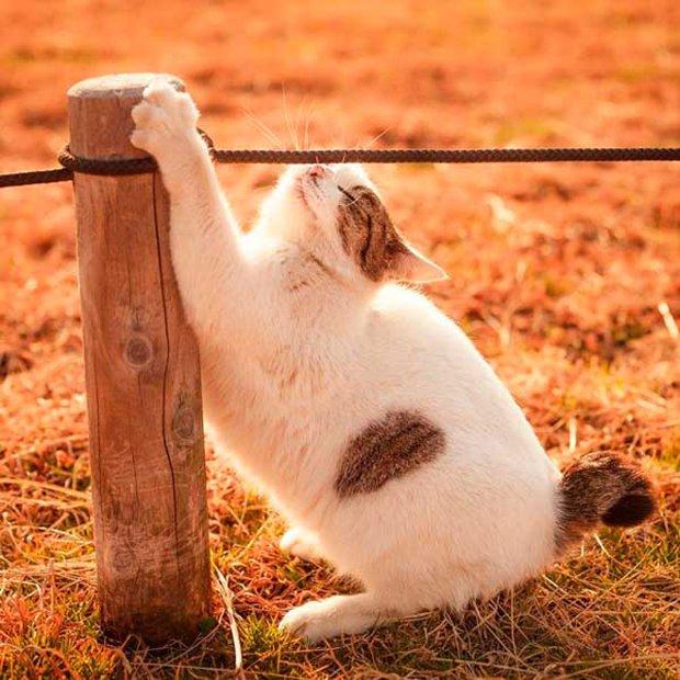 Gatos são fotogênicos (9)