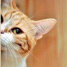 esconde esconde gato thumb
