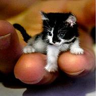 Animais tão pequeninos que vão derreter seu coração