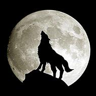 Você sabe o quão grande é a lua?
