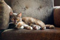 Os 10 mandamentos dos gatos