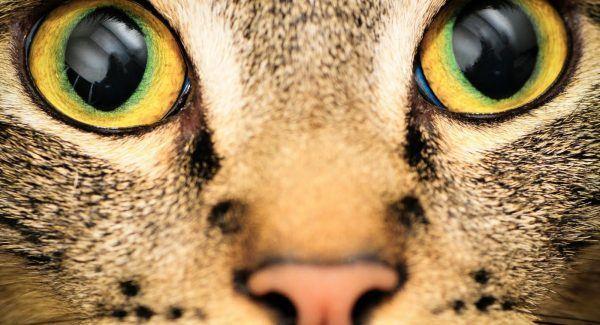 Como os animais veem o mundo 2
