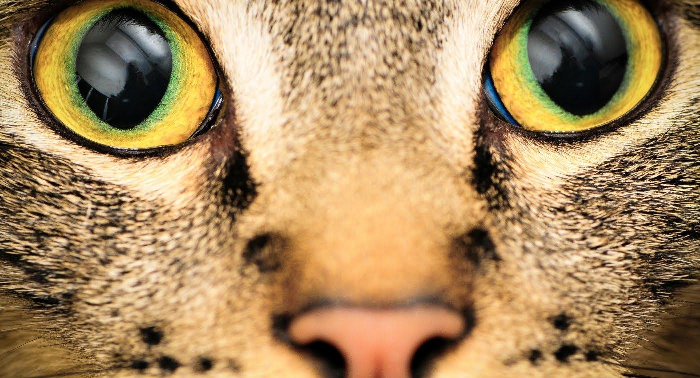 Como os animais veem o mundo?