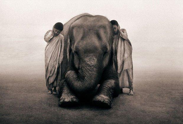 Seres humanos e animais selvagens (2)