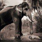 Seres humanos e animais selvagens (23)