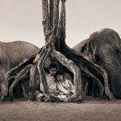 Seres humanos e animais selvagens 3