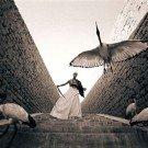 Seres humanos e animais selvagens (9)