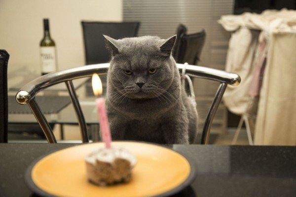happy-birthday-cat