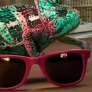 Usando um camaleão para escolher o modelo do óculos