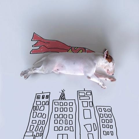 Ilustrações e um bull terrier (2)