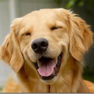Se você nunca viu um cachorro rindo, essa é sua chance!