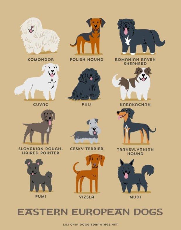 Cachorros do mundo (1)