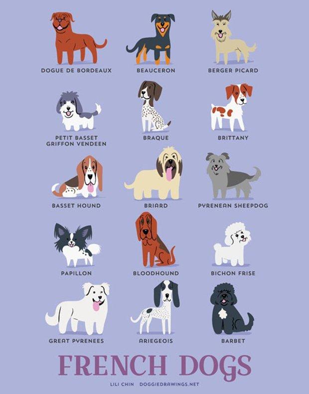 Cachorros do mundo (10)