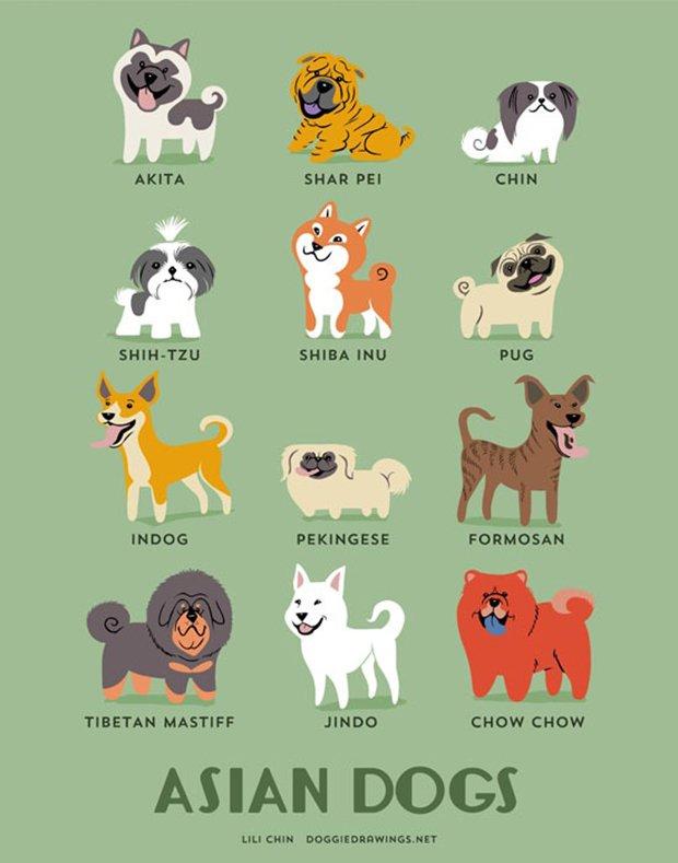 Cachorros do mundo (11)