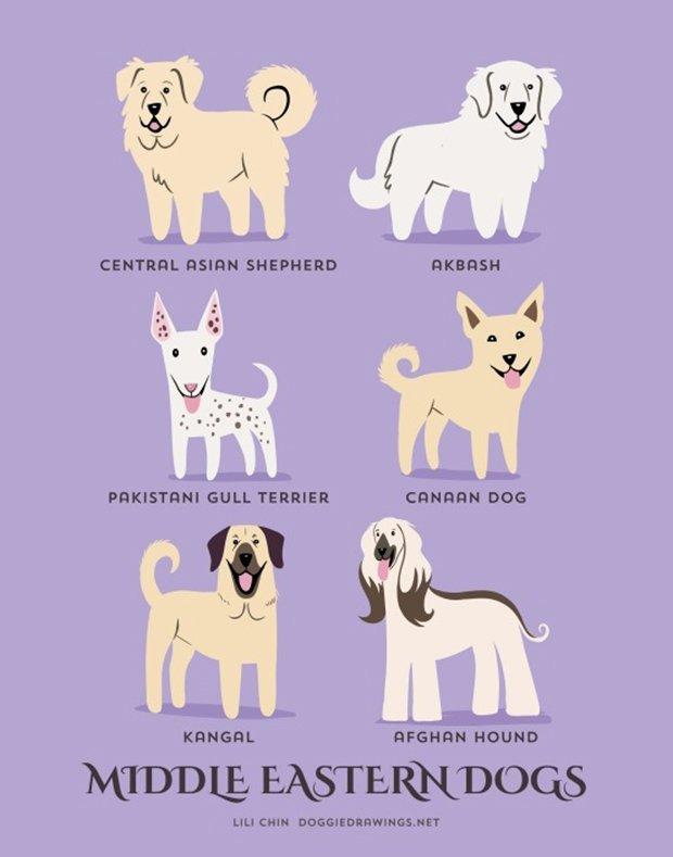 Cachorros do mundo (12)