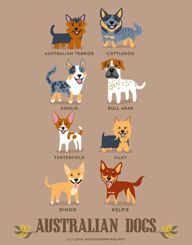 Cachorros do mundo (13)