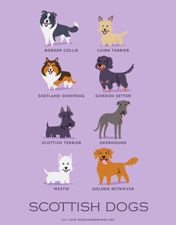Cachorros do mundo (3)