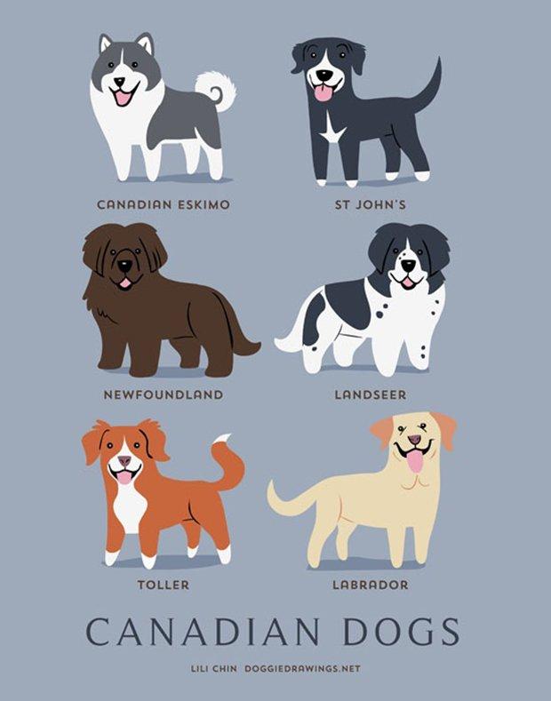 Cachorros do mundo (4)