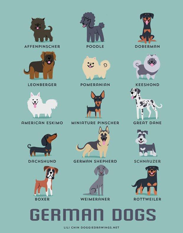 Cachorros do mundo (6)